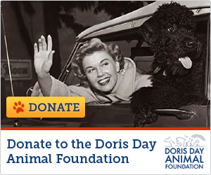 Official DDAF Grantee | Doris Day Animal Foundation